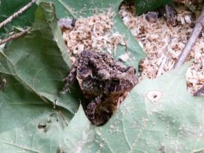 Froggy hiding in the trees at Bushkill Falls