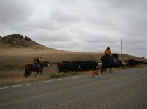 Cattle Rustling in Wyoming