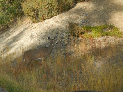 A deer on the roadside!