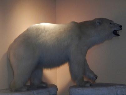 Stuffed Polar bear at Pikes Waterfront Lodge Fairbanks Alaska