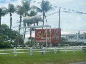 Safari in Key West FL
