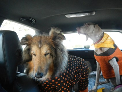 On our way to Scarecrow Fest St. Charles IL 2012