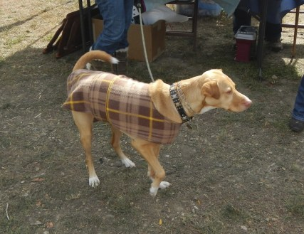 Scottish Doggy at Scarecrow Fest St. Charles IL 2012