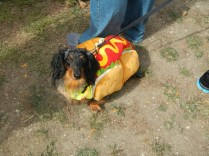 Doggie in a Hot Dog Costume at Scarecrow Fest St. Charles IL 2012