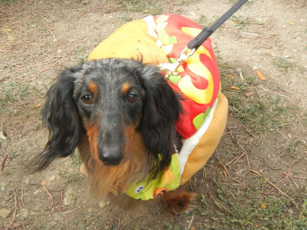 A TRUE Chicago Hot Dog at Scarecrow Fest