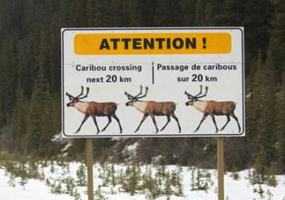 Another Caribou Crossing
