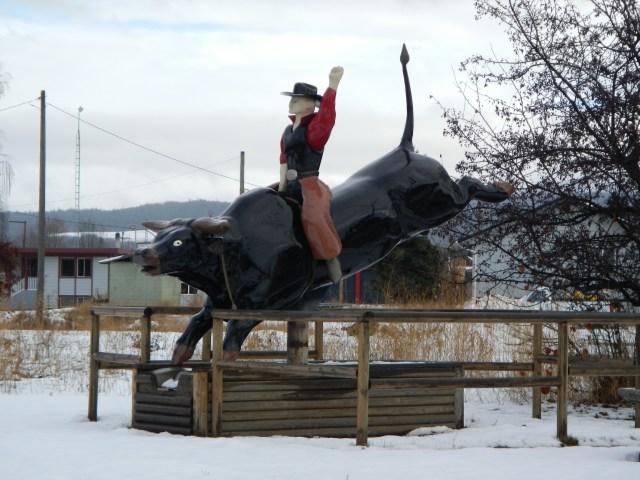 Houston Bull Rider