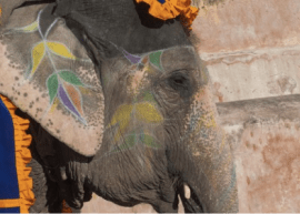 Elephant - Activities in Jaupir