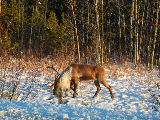 Spotting wildlife along the way