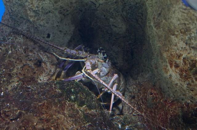 Florida Aquarium Bays and Beaches