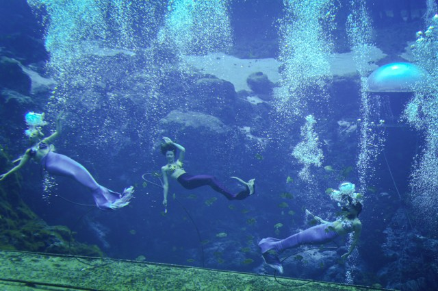 Mermaids at Weeki Wachee Springs State Park