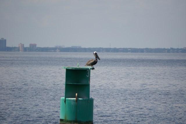 Hey, I'm a Pelican!