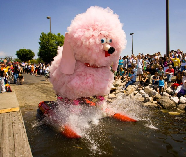 Fifi at The Kinetic Sculpture  Race - Photo by Tom Jones