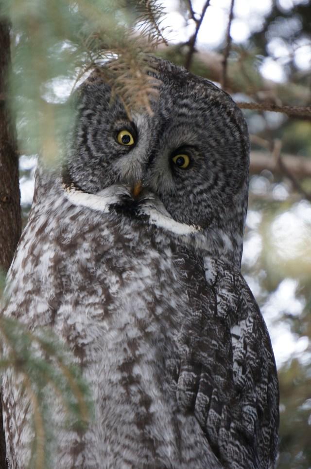 Who loves the Calgary Zoo...I do!