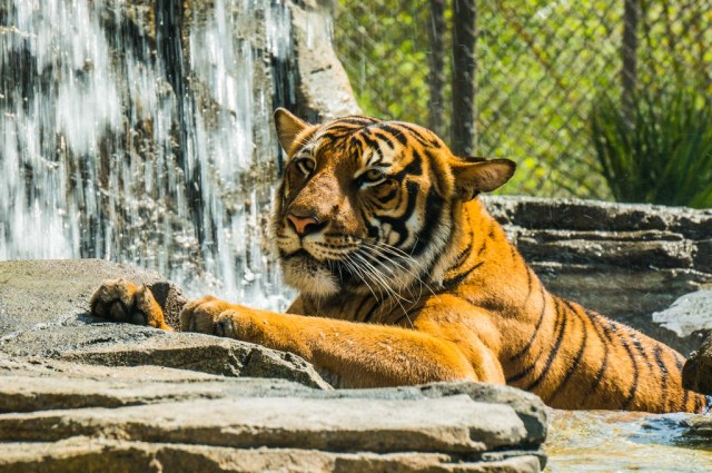 Jacksonville Zoo 19 Low-res