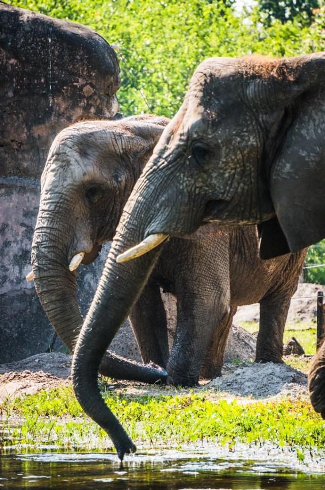Jacksonville Zoo 9 Low-res