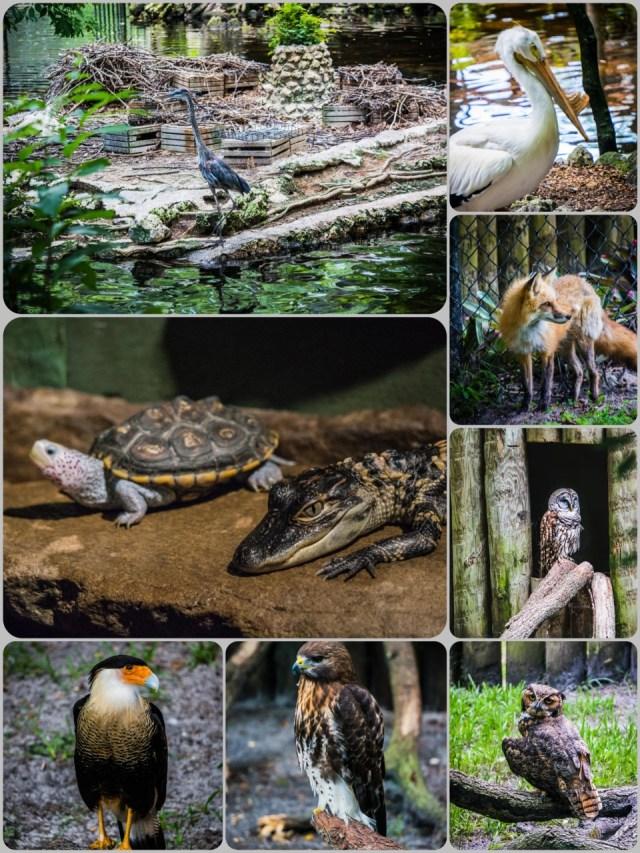 Ellie Wildlife Park Homossassa FL