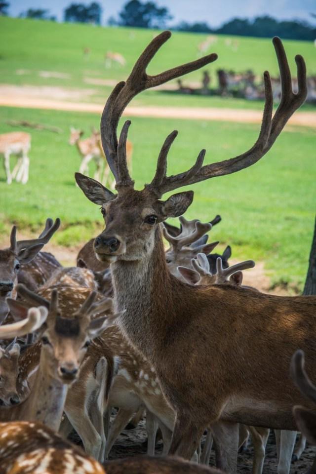 Global Wildlife Center LA 94 Low-res