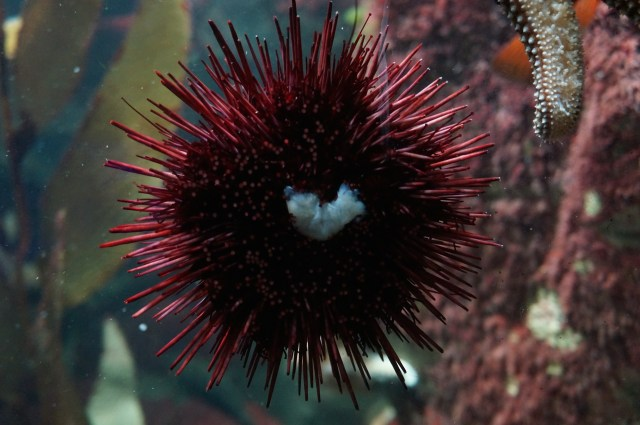 Even sea urchins love the Pittsburgh zoo