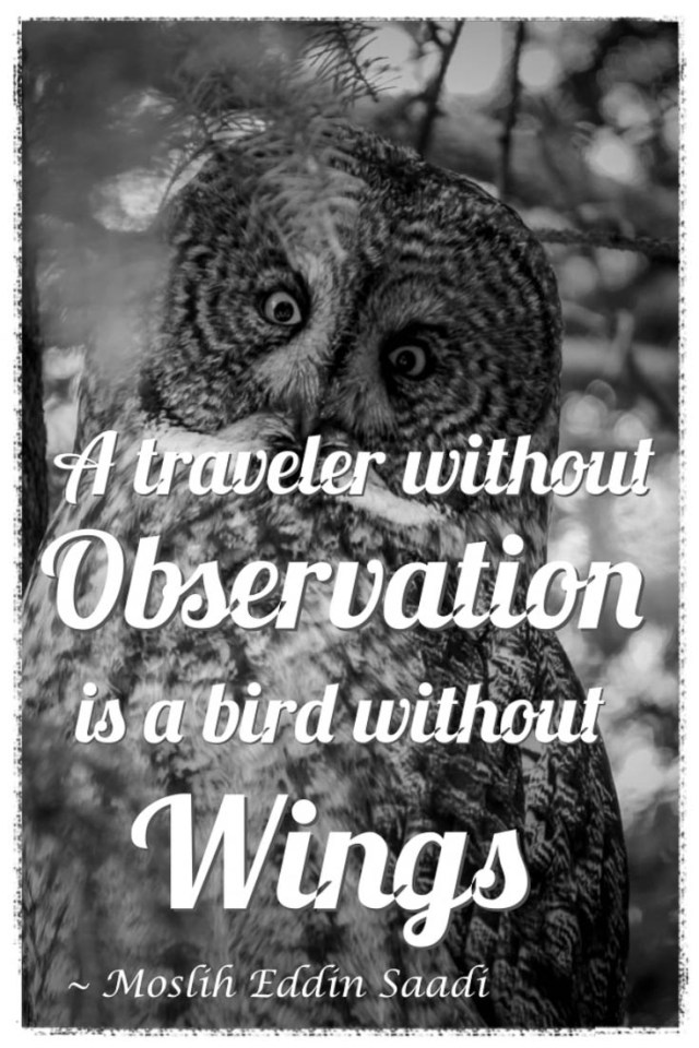 A traveler without observation is a bird without wings travel quote