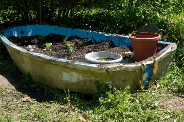 Gardening for fresh veggies