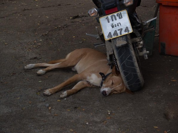 a dog and his motorbike