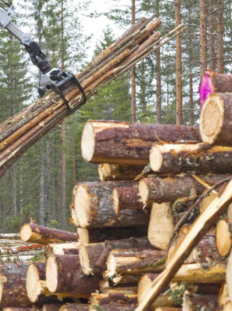 West Cork-based Forest Owners Co-operative Society comments on delays in the issue of timber felling licences