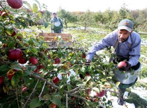Coronavirus: Health unit order aims to protect migrant farm workers in Kawarthas, Haliburton, Northumberland