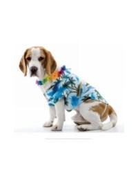 Hawaiian Doggy