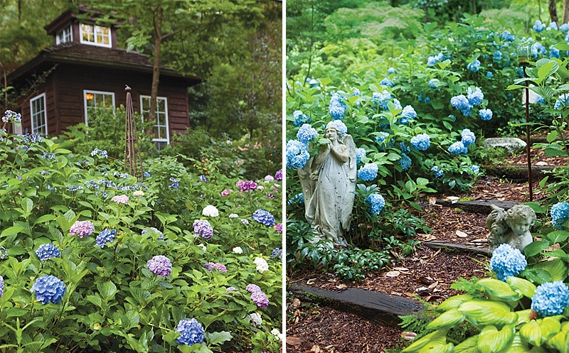Beautiful Hydrangea Garden  The Cottage Journal