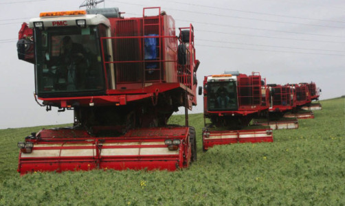 Growing peas or beans will be one way to meet Environmental Focus Area requirements.