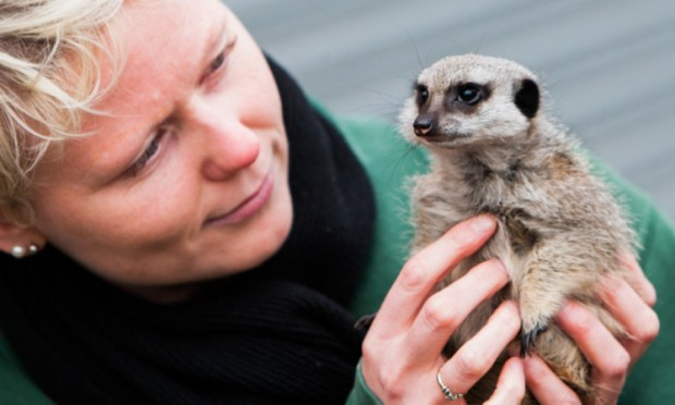 Volunteer project coordinator Nicky Lindsay with Amira, the meerkat she hand reared.