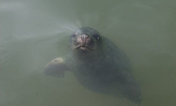 seals can learn human
