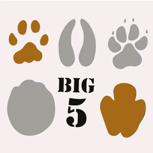 Big Five African Animal Spoor Stencil