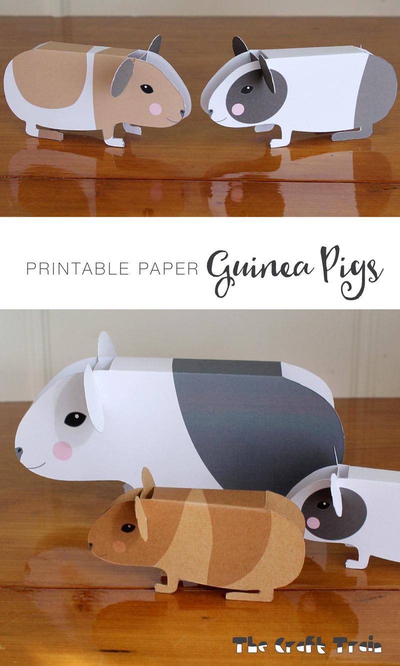 medium resolution of guinea pigs pin