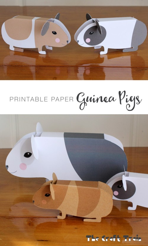 small resolution of guinea pigs pin