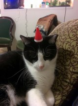 Steve does not share my enthusiasm for the holidays.