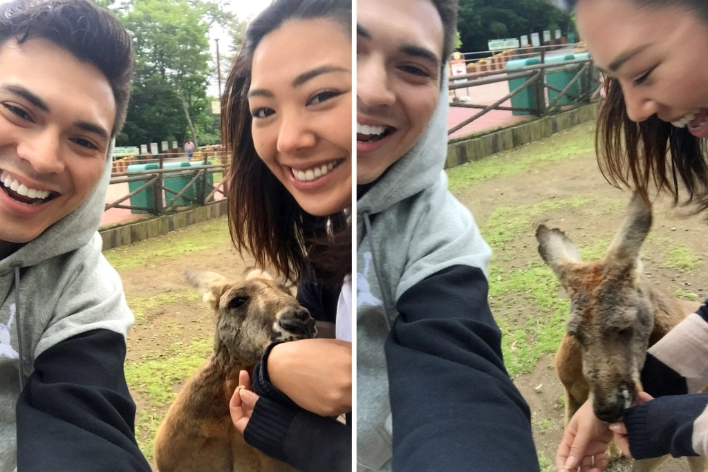 fuji-safari-park-japan-feeding-kangaroos-1