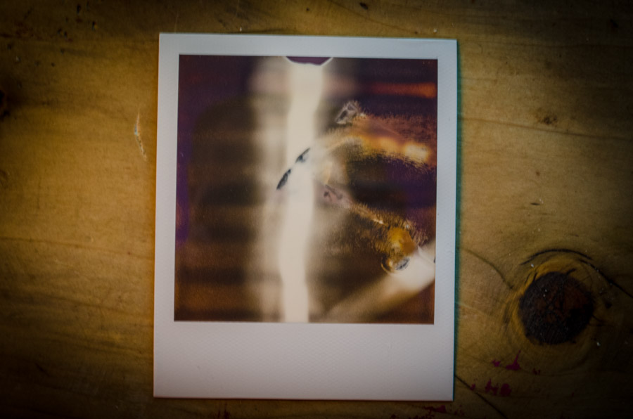 the bacon polaroids-0017