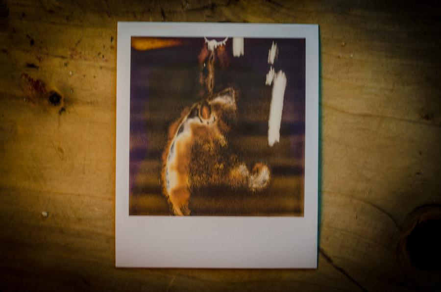 the bacon polaroids-0018