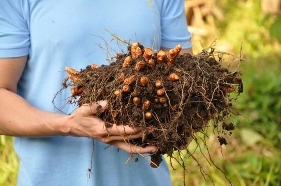 fincaluna1 An Enlightening Farmstay Deep in the Costa Rican Rainforest