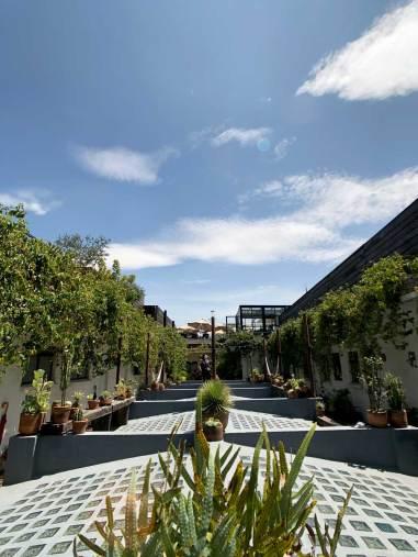 Chaya_Mexico_city_03