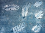 images of feathers left behind on the acetate