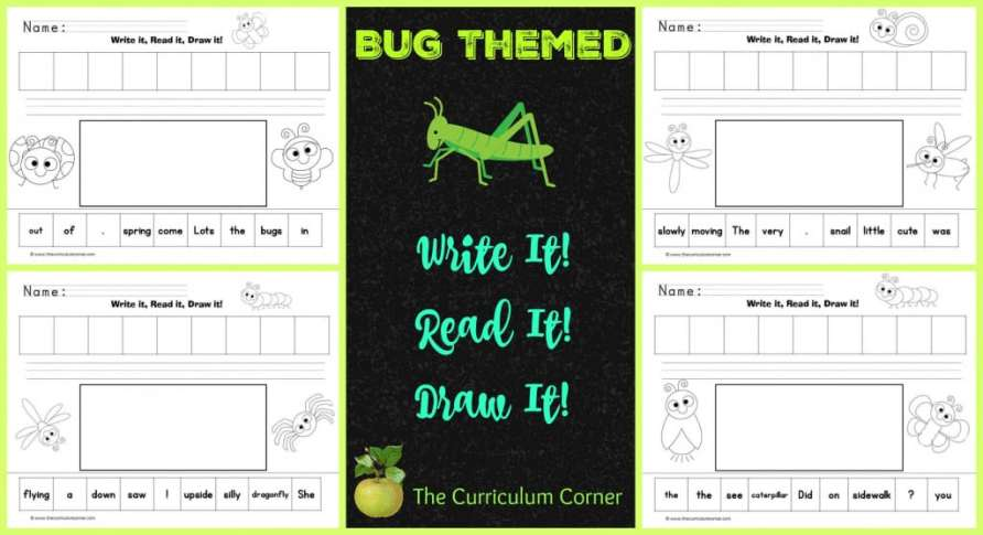 Insect Scrambled Sentences Bug Themed Write It! Read It! Draw It! LIteracy center activity The Curriculum Corner
