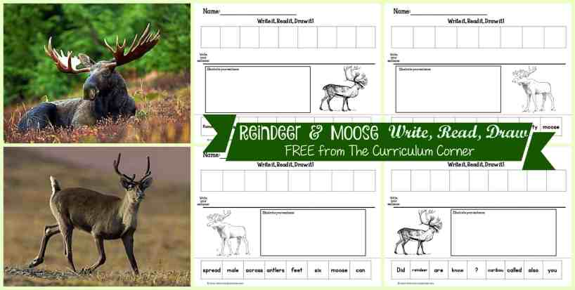 FREEBIE Reindeer & Moose Read, Write, Draw Literacy Center Activities from The Curriculum Corner