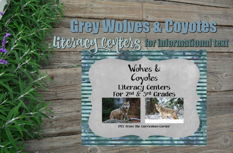This informational text pack focuses on grey wolves and coyotes. These literacy centers are designed to help your children work with informational text during their center time.