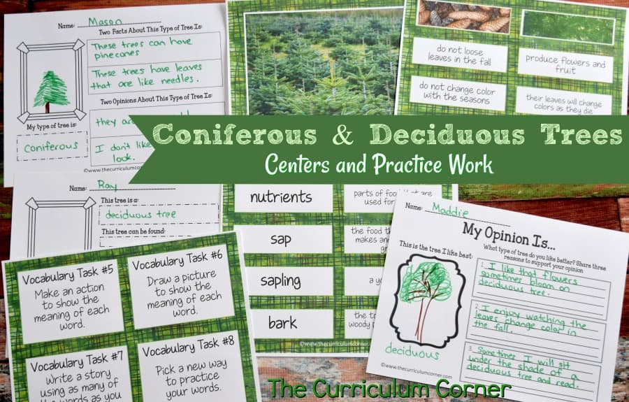 These trees typically grow wild in u.s. Coniferous Deciduous Trees The Curriculum Corner 4 5 6