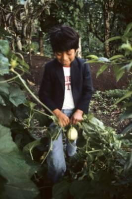 Guatemala 002