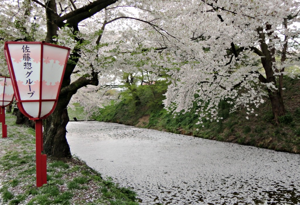 yulia cherry blossom