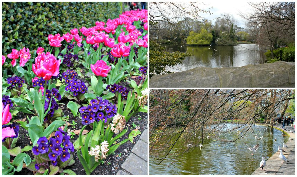 Enjoying the birds and flowers in St. Stephen's Green